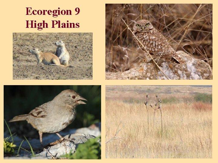 Ecoregion 9 High Plains