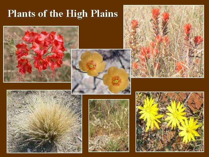 Plants of the High Plains