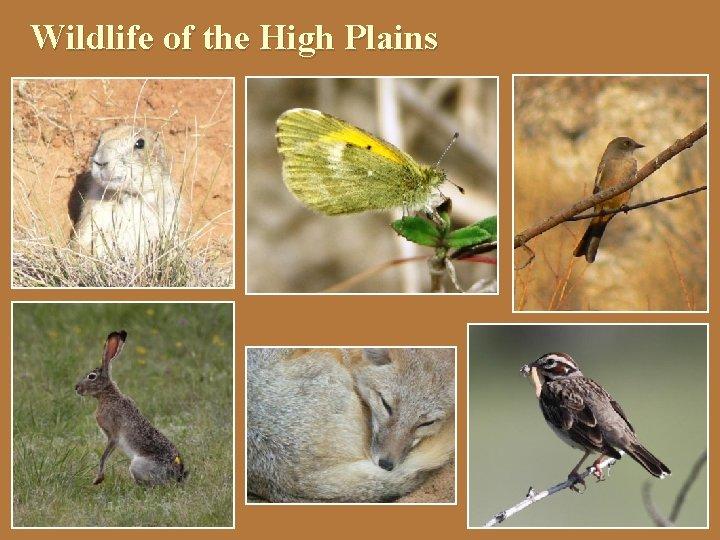 Wildlife of the High Plains