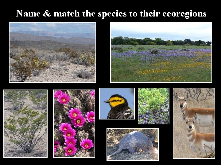 Name & match the species to their ecoregions