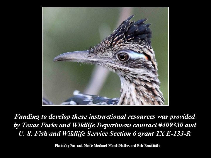 Funding to develop these instructional resources was provided by Texas Parks and Wildlife Department