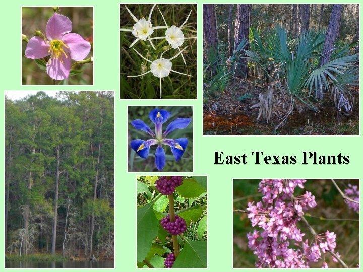 East Texas Plants
