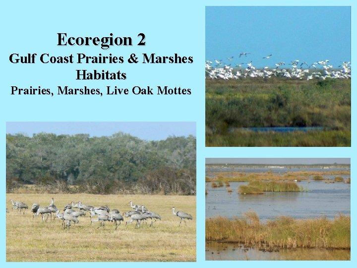 Ecoregion 2 Gulf Coast Prairies & Marshes Habitats Prairies, Marshes, Live Oak Mottes