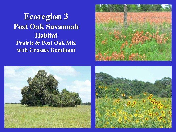 Ecoregion 3 Post Oak Savannah Habitat Prairie & Post Oak Mix with Grasses Dominant