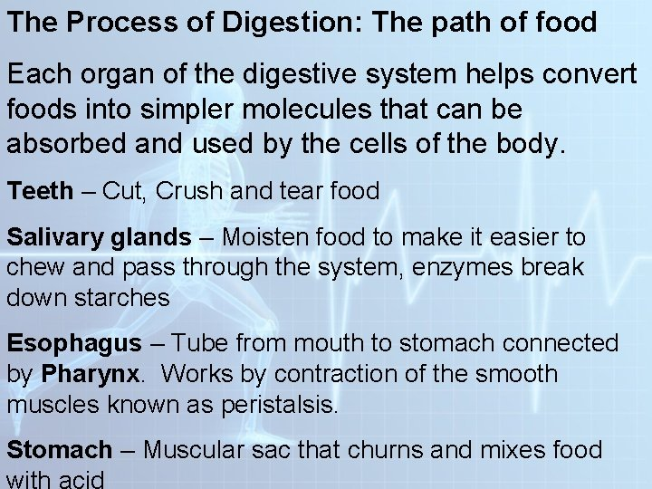 The Process of Digestion: The path of food Each organ of the digestive system