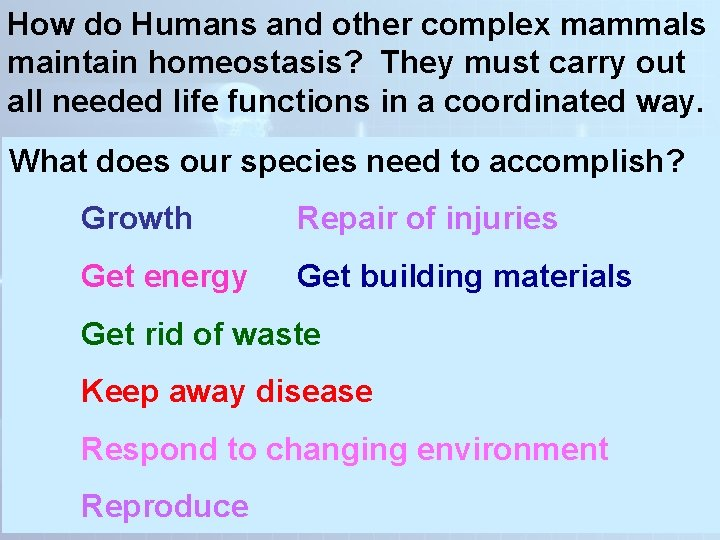How do Humans and other complex mammals maintain homeostasis? They must carry out all