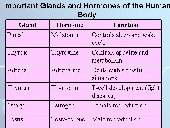 Important Glands and Hormones of the Human Body Gland Pineal Hormone Melatonin Thyroid Thyroxine