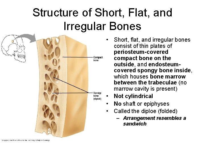 Structure of Short, Flat, and Irregular Bones • Short, flat, and irregular bones consist
