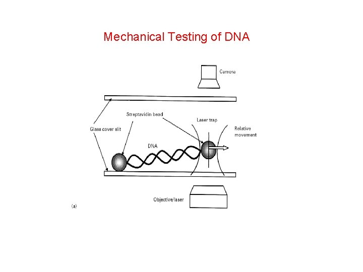 Mechanical Testing of DNA