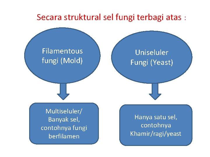 Secara struktural sel fungi terbagi atas : Filamentous fungi (Mold) Uniseluler Fungi (Yeast)