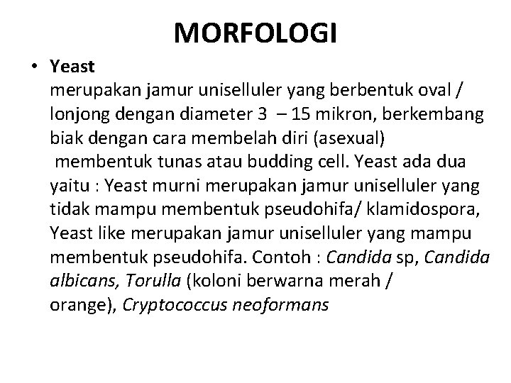 MORFOLOGI • Yeast merupakan jamur uniselluler yang berbentuk oval / lonjong dengan diameter 3