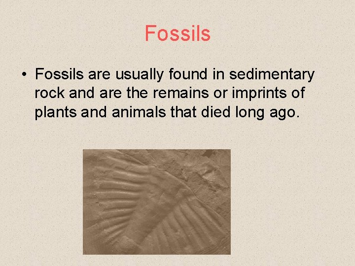 Fossils • Fossils are usually found in sedimentary rock and are the remains or