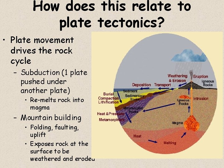 How does this relate to plate tectonics? • Plate movement drives the rock cycle