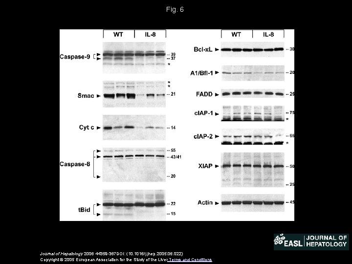 Fig. 6 Journal of Hepatology 2006 44359 -367 DOI: (10. 1016/j. jhep. 2005. 06.