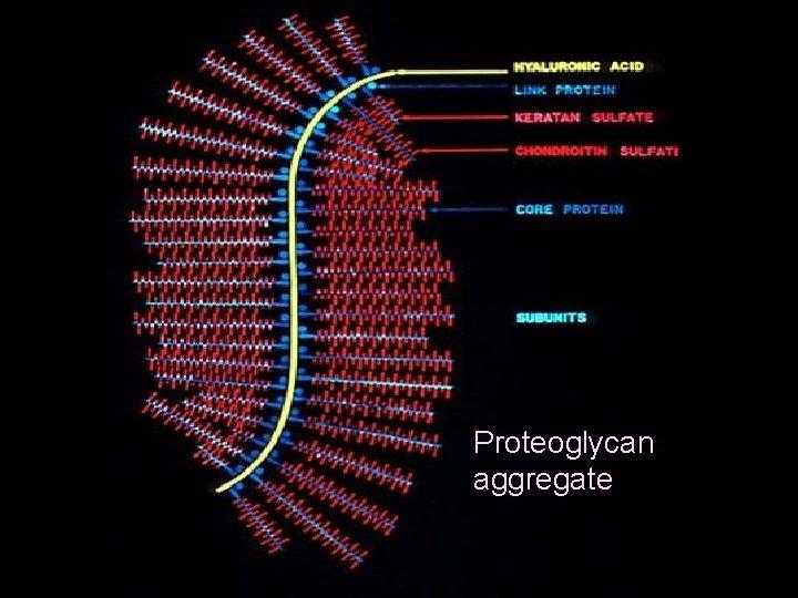 piokl Proteoglycan aggregate