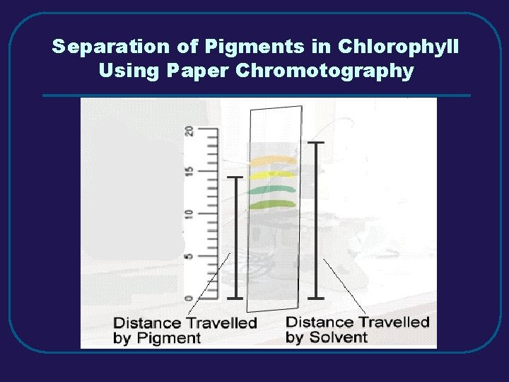 Separation of Pigments in Chlorophyll Using Paper Chromotography