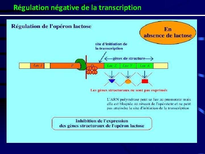 Régulation négative de la transcription