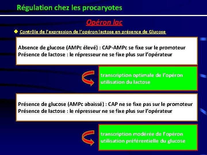 Régulation chez les procaryotes Opéron lac ❖ Contrôle de l'expression de l'opéron lactose en