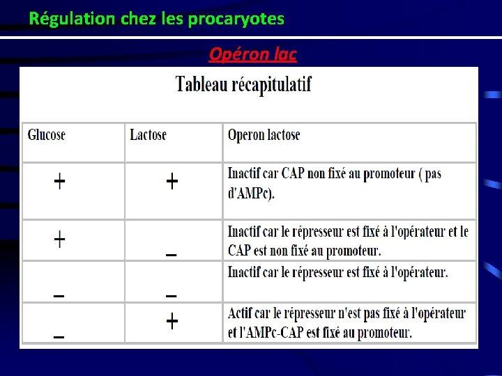 Régulation chez les procaryotes Opéron lac