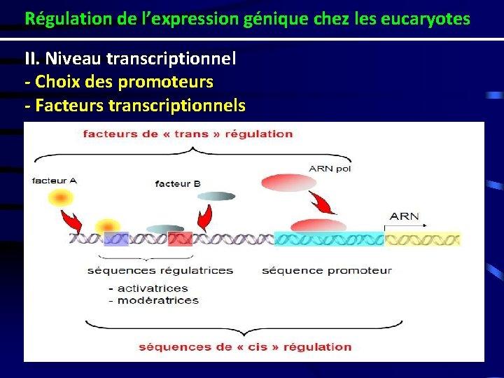Régulation de l'expression génique chez les eucaryotes II. Niveau transcriptionnel - Choix des promoteurs