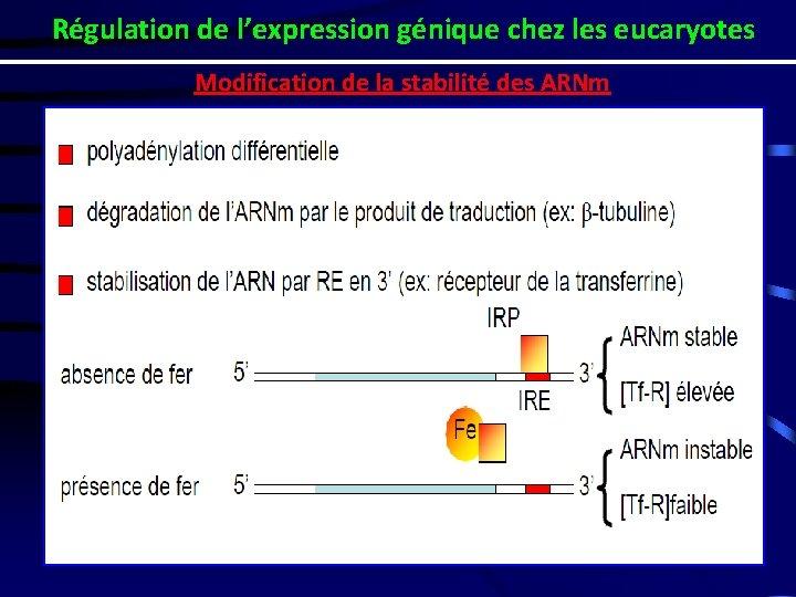 Régulation de l'expression génique chez les eucaryotes Modification de la stabilité des ARNm