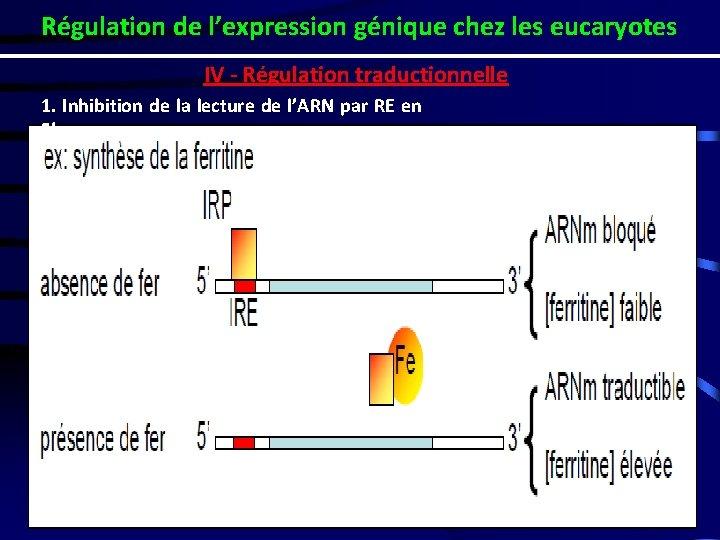 Régulation de l'expression génique chez les eucaryotes IV - Régulation traductionnelle 1. Inhibition de