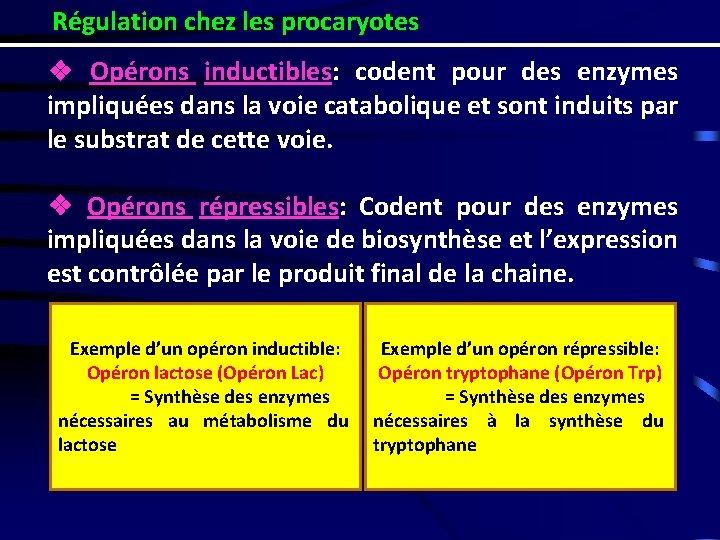 Régulation chez les procaryotes ❖ Opérons inductibles: codent pour des enzymes impliquées dans la