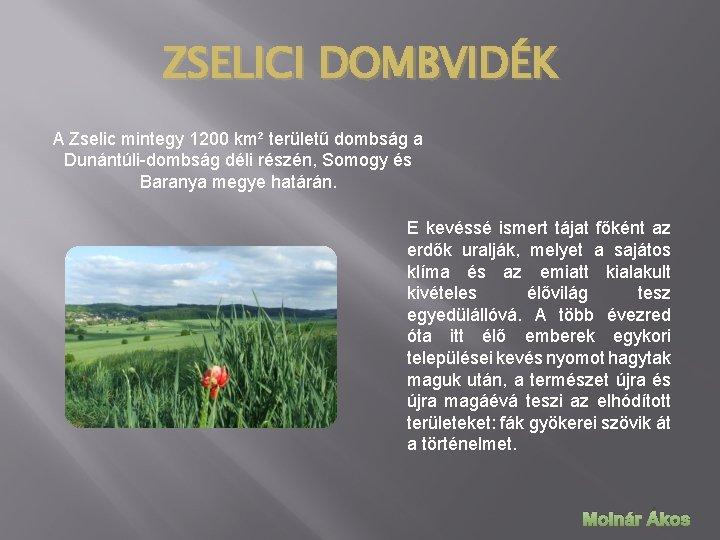 ZSELICI DOMBVIDÉK A Zselic mintegy 1200 km² területű dombság a Dunántúli-dombság déli részén, Somogy