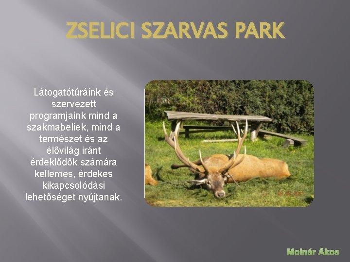 ZSELICI SZARVAS PARK Látogatótúráink és szervezett programjaink mind a szakmabeliek, mind a természet és