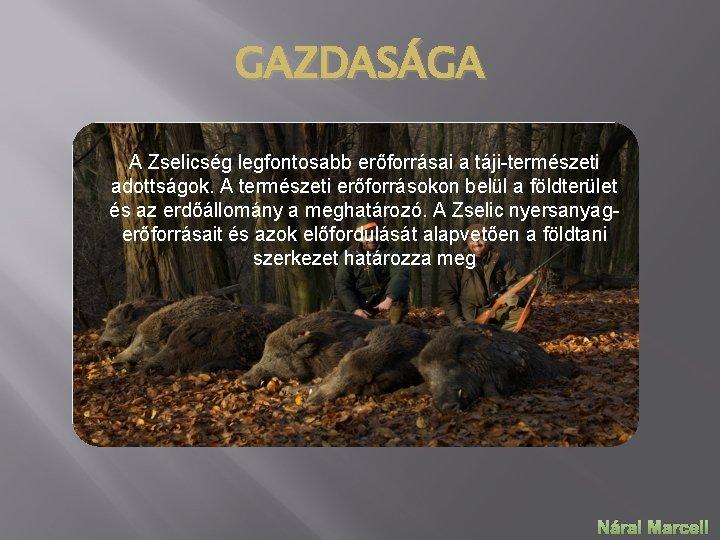 GAZDASÁGA A Zselicség legfontosabb erőforrásai a táji-természeti adottságok. A természeti erőforrásokon belül a földterület