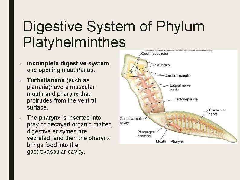 ocelli platyhelminthes Trichomonas látens forma