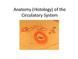 Anatomy Histology of the Circulatory System Blood Vessels