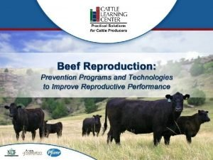 National Cattlemens Beef Association Introduction 2 Welcome Welcome