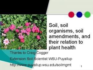Soil soil organisms soil amendments and their relation