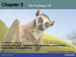 Chapter 5 The Working Cell Power Point Lectures