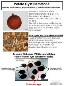 Potato Cyst Nematode Globodera pallida Pale Cyst Nematode