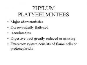 turbellaria de grad platyhelminthes)