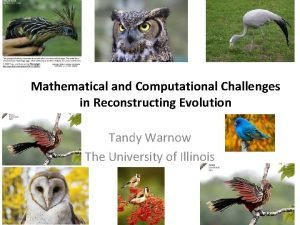 Mathematical and Computational Challenges in Reconstructing Evolution Tandy