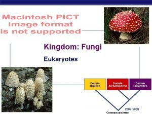 Kingdom Fungi Eukaryotes Domain Bacteria AP Biology Domain