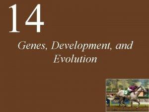 14 Genes Development and Evolution Chapter 14 Genes