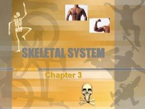 SKELETAL SYSTEM Chapter 3 FUNCTIONS OF SKELETAL SYSTEM