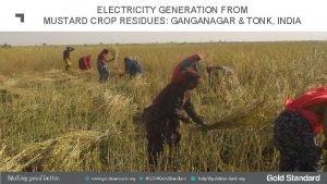 ELECTRICITY GENERATION FROM MUSTARD CROP RESIDUES GANGANAGAR TONK