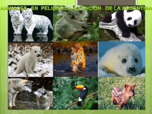 Jaguaret Habita en Jujuy Salta Formosa Chaco y