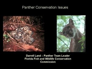 Panther Conservation Issues Darrell Land Panther Team Leader
