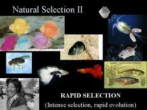 Natural Selection II RAPID SELECTION Intense selection rapid