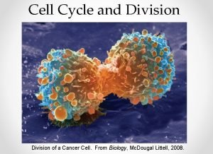 Cell Cycle and Division of a Cancer Cell