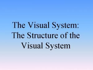 The Visual System The Structure of the Visual