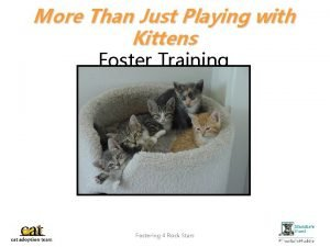 More Than Just Playing with Kittens Foster Training
