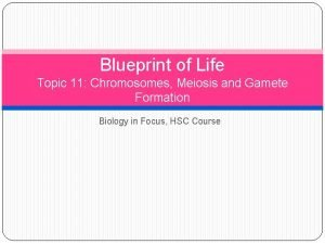 Blueprint of Life Topic 11 Chromosomes Meiosis and