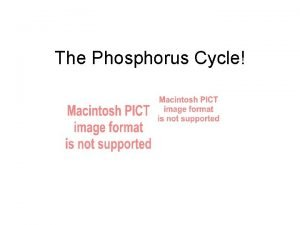 The Phosphorus Cycle Phosphorus is an essential nutrient